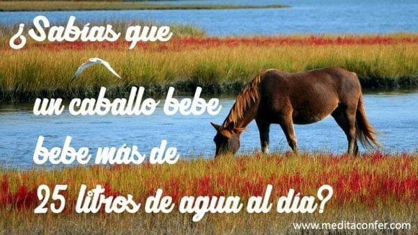 Hay caballos que beben más de 25 litros al día.