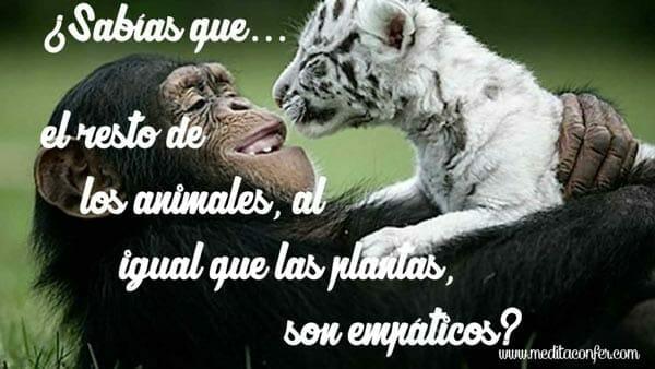 Los animales también tienen empatía.