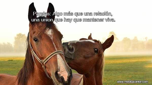 Parejas: Algo más que una relación, una union que hay que mantener viva.